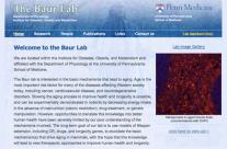 Baur Lab